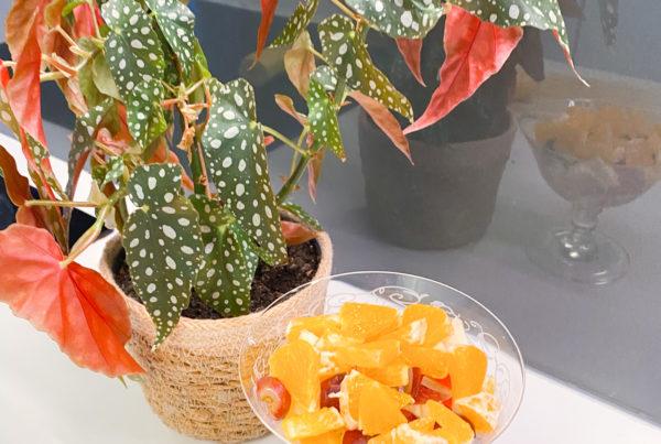 Fruktsalat Anita Wiig